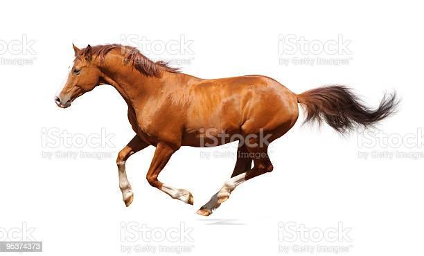 Single sorrel trakehner stallion leaping in the air picture id95374373?b=1&k=6&m=95374373&s=612x612&h=urkhpgmoz0d75tqxlma1lj1vctj76m2twi5qf4fxz6y=