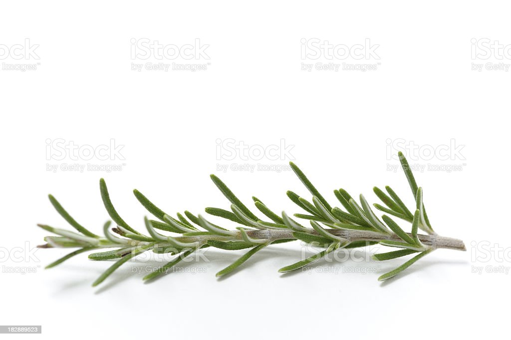 Single Sprig of Fresh Rosemary royalty-free stock photo