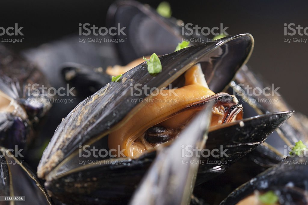 Single steamed mussel close-up royalty-free stock photo