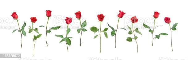 Single stem roses picture id157528572?b=1&k=6&m=157528572&s=612x612&h=1vcav5 5w mxwd5ps6mj 4jjgwgij73lbx3qevzwm3w=