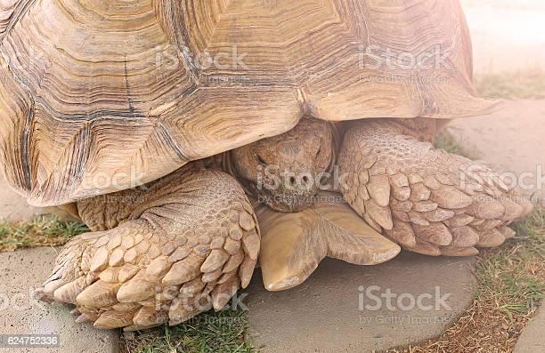 Single tortoise recoiling into his shell picture id624752336?b=1&k=6&m=624752336&s=612x612&h=qv4cvpdshx1hm30tn9iqbuyunnrlscigvkrusxzyrew=