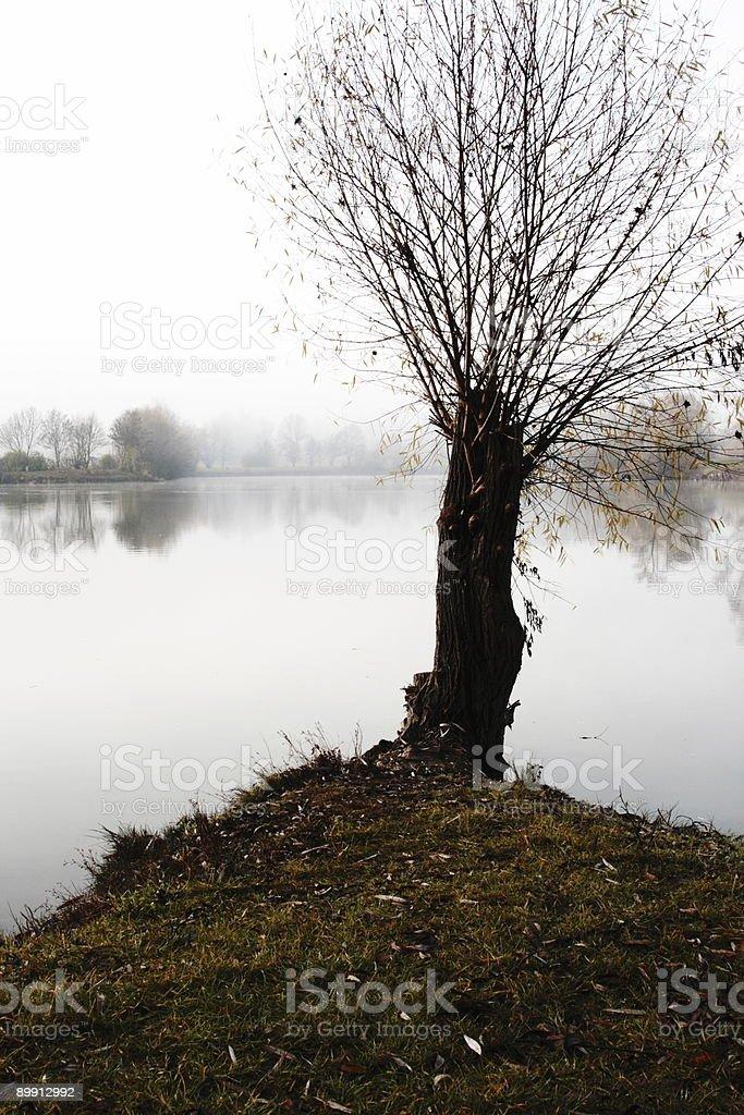 Einzigen Baum im nebeligen See Lizenzfreies stock-foto
