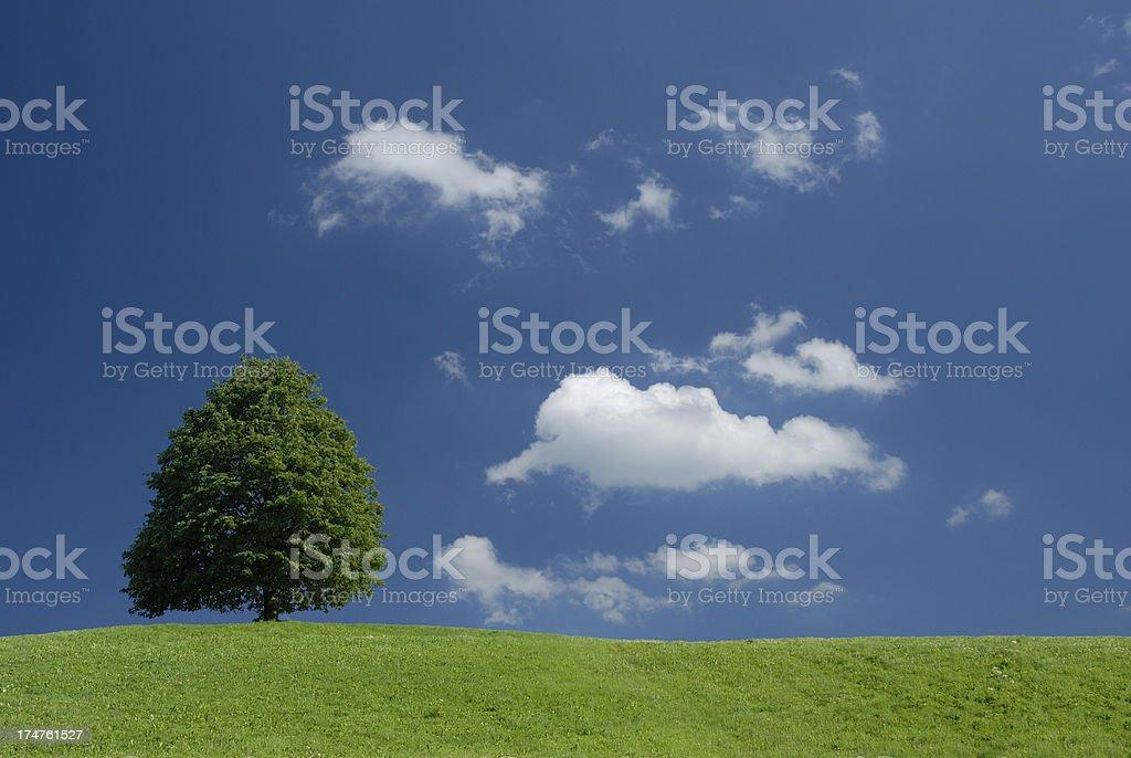single tree at horizon royalty-free stock photo