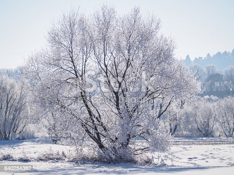 Single tree covered in frost and snow II.