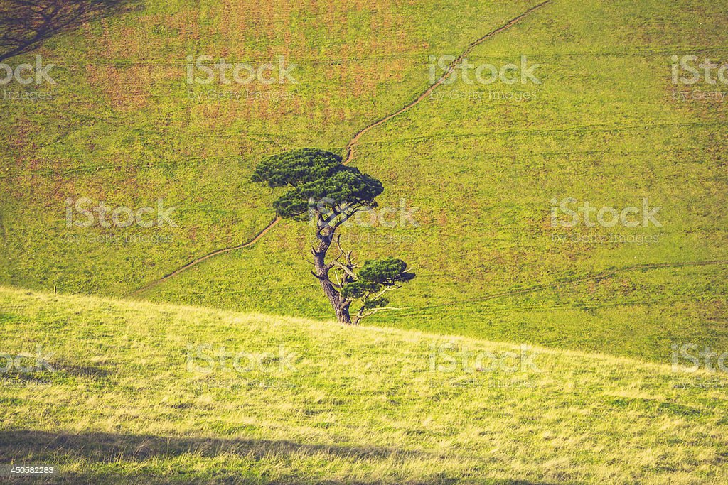 Single tree growing amongst rolling green hills royalty-free stock photo
