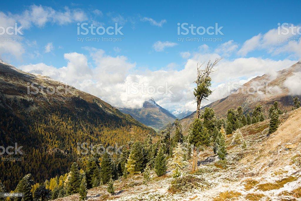single tree in autumn zbiór zdjęć royalty-free