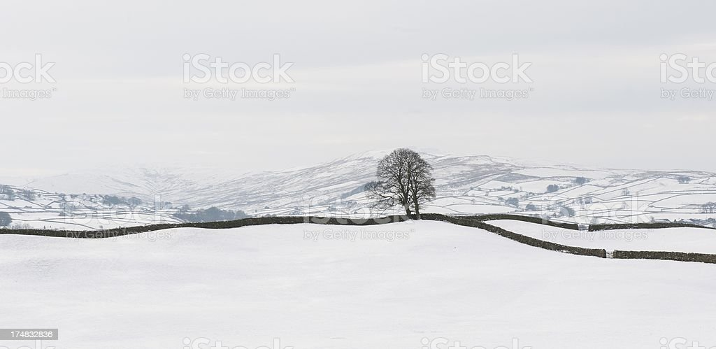 single tree in Dales royalty-free stock photo