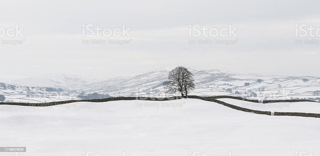single tree in Dales stock photo