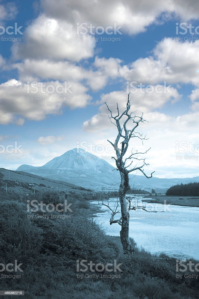 single tree in Donegal scenic view blue tone stock photo