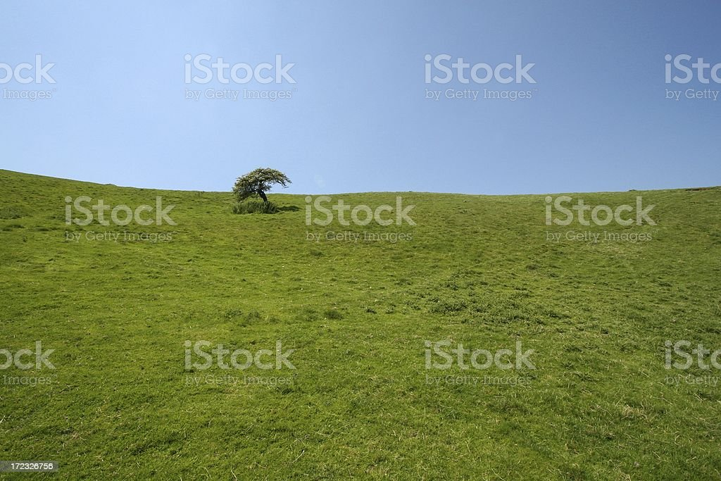 Single tree in expanse of grass stock photo