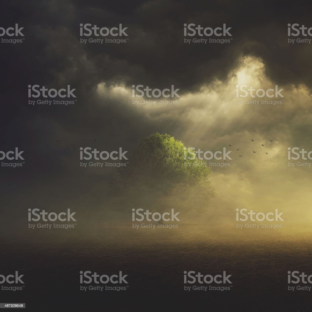 Single Tree in field stock photo