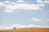 Single tree surviving in a desert.  Click on a similar image below: