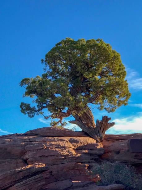 Single Tree in Rock stock photo
