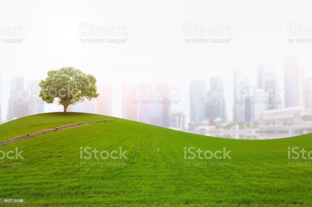 single tree in the city stock photo