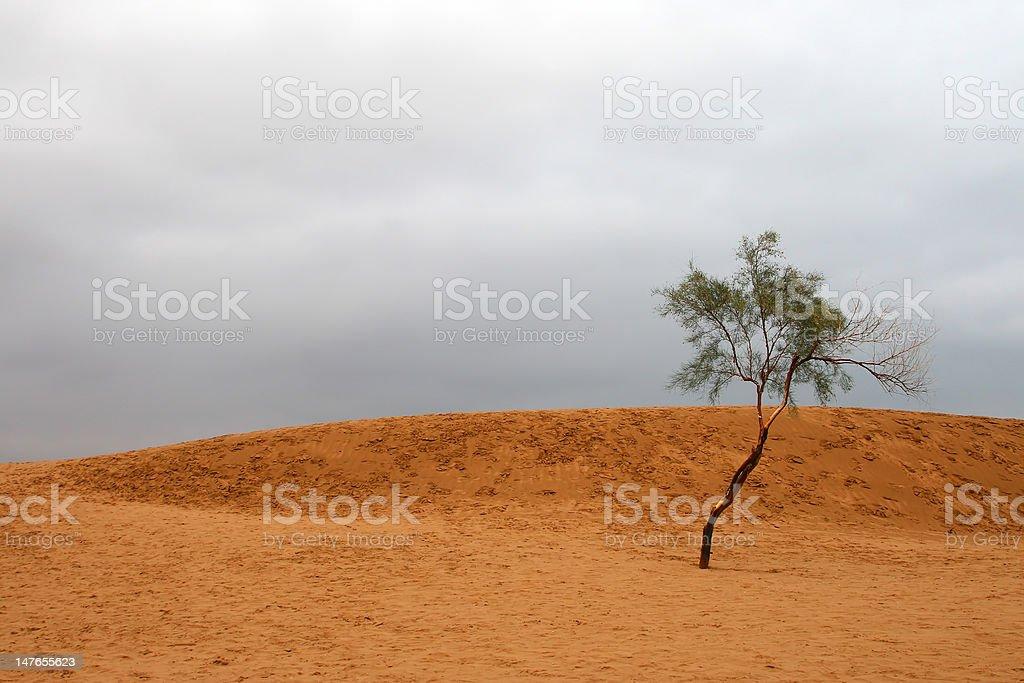 Single tree in the desert stock photo