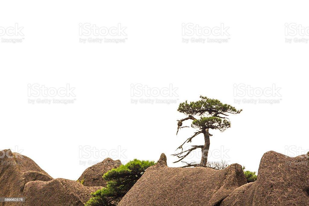 Single tree isolated on white stock photo