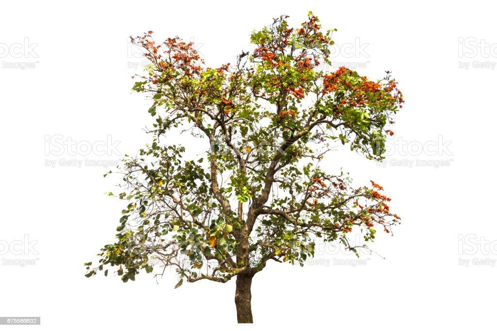 single tree Isolated photo libre de droits