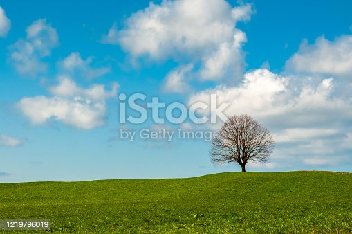 Single tree without leaves on a green hill in Irschenberg, Germany