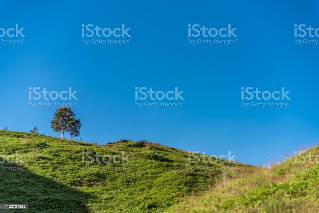 Single tree on hill stock photo