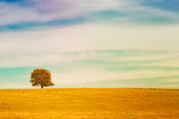 single tree on meadow full of flowers in autumn landscape under blue sky with clouds - one animal stock photos and pictures