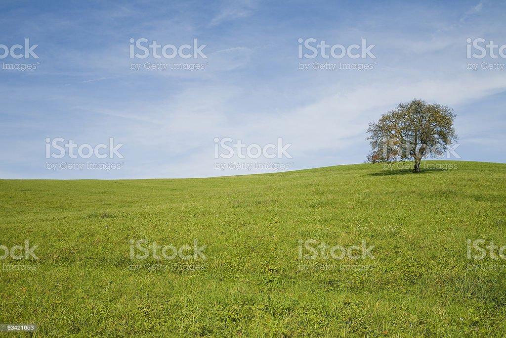 single tree on meadow stock photo