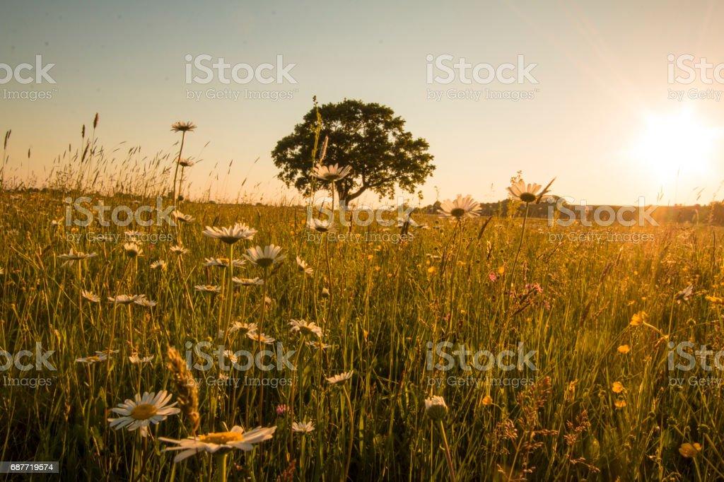 Single tree on the meadow stock photo