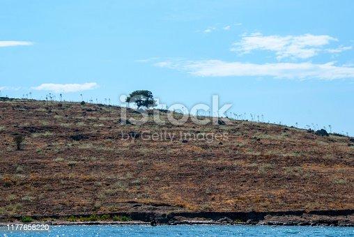 Single tree over the sea