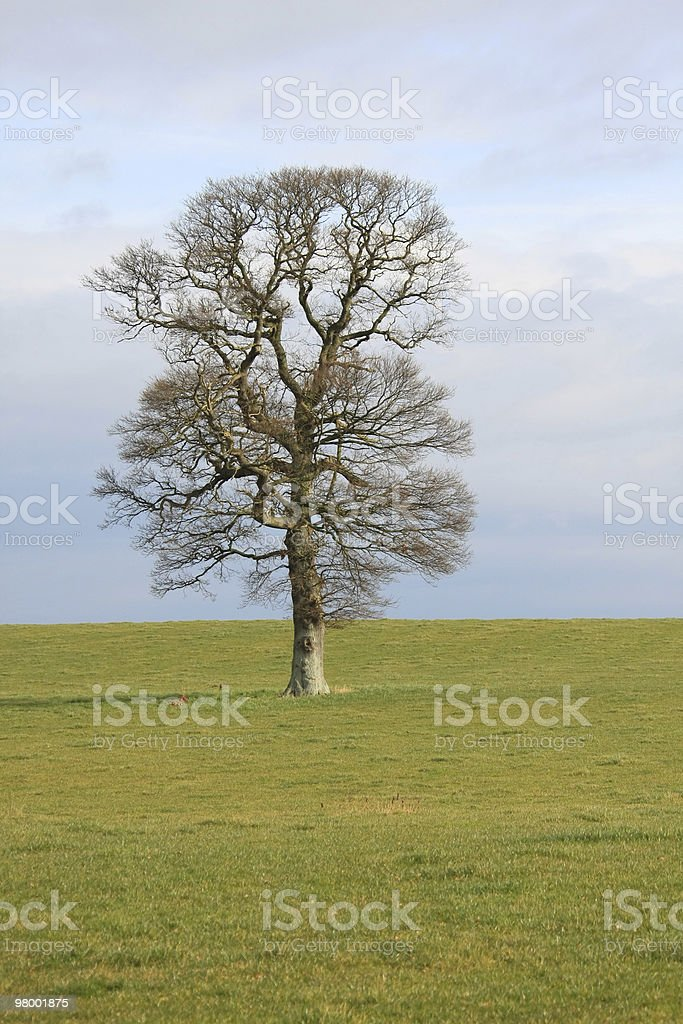 Single Tree royalty free stockfoto