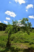 tree in the meadow (198) panorama format