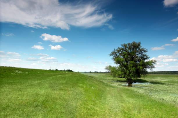 화창한 날 동안 oder 강에 서식 하는 보호 지에 녹색 잔디로 둘러싸인 단일 트리 - 브란덴부르크 주 뉴스 사진 이미지