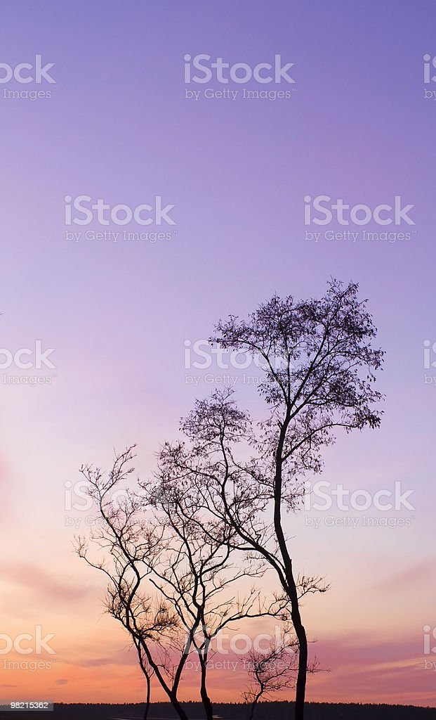 Single tree without leaf royalty-free stock photo
