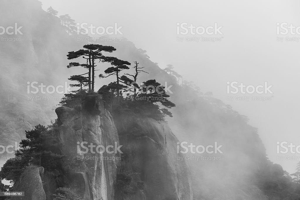 Single trees on foggy mountain stock photo