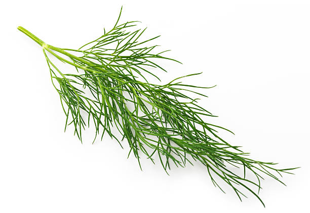 Single twig of fresh dill isolated on white View from above of a thin twig of fresh green dill. The image is properly isolated on a white background with a slight natural shadow. Studio shot photograph taken with Canon 5D Mark III (22 megapixels) at 100 ISO. dill stock pictures, royalty-free photos & images