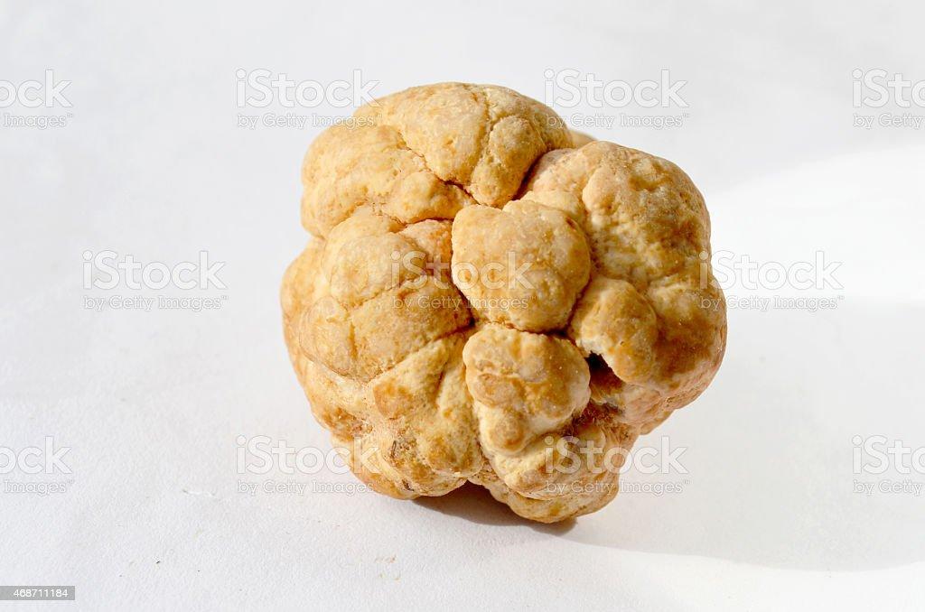 Single White Truffle - Tuber Borchii stok fotoğrafı