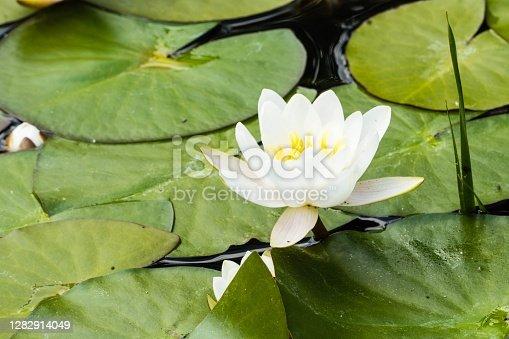 Wild Flowers Nature
