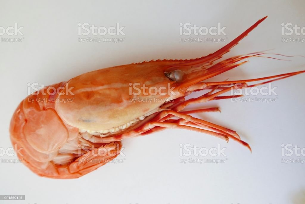 Single, whole, cooked Spot Prawn on a white plate. stock photo