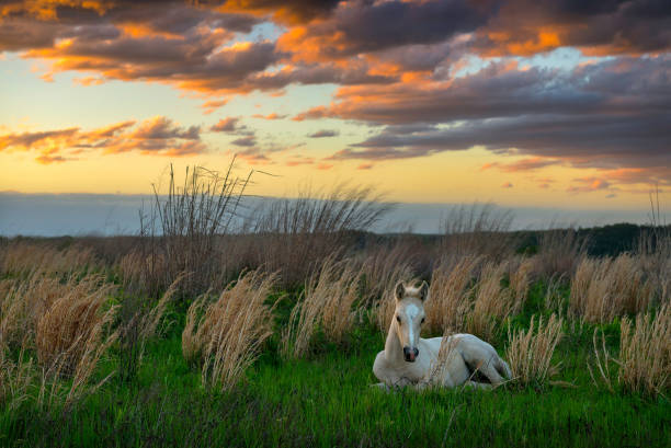 Single wild colt against scenic sunset stock photo