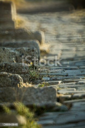 View of a Single Yellow Daisy in Obsolete Stone Stairs.