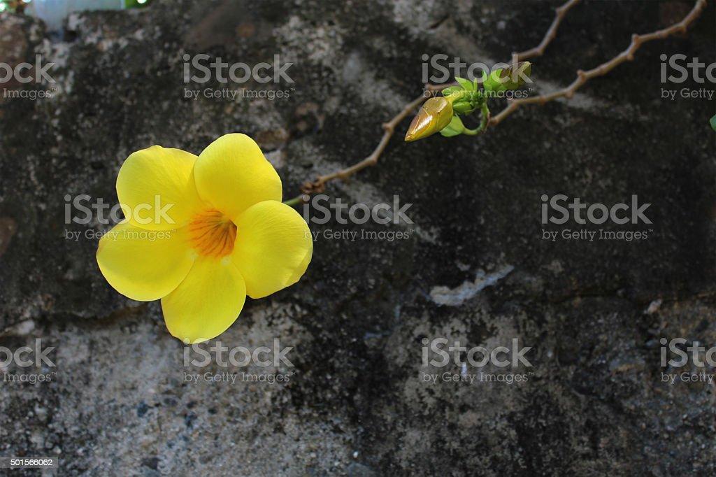 Single yellow flower on the street. stock photo