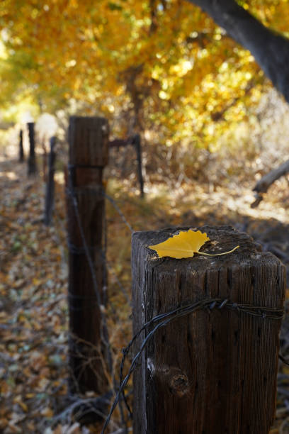 A single yellow leaf rests on a fencepost in autumn. stock photo