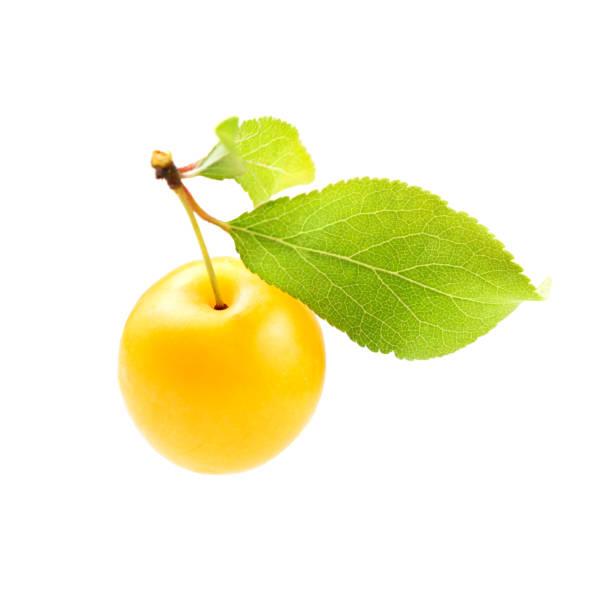 prune de mirabele jaune (prunus domestica syriaca) avec feuille verte isolée sur fond blanc - mirabelle photos et images de collection