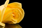 Single yellow rose isolated on black background, place for text, close up