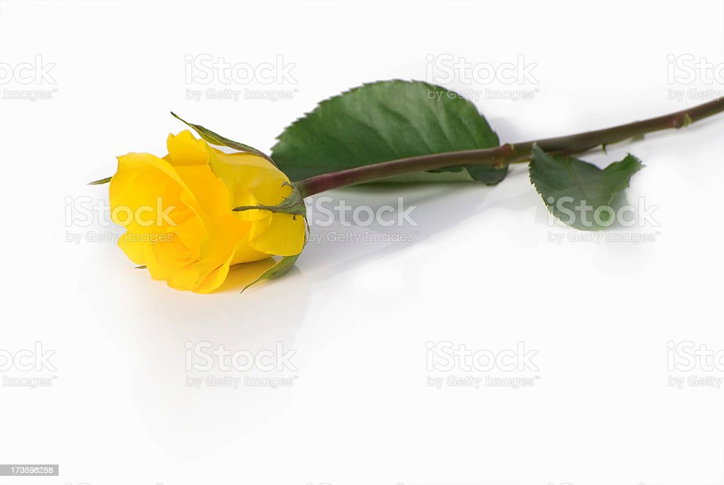 Single yellow rose stock photo more pictures of cut out istock single yellow rose royalty free stock photo mightylinksfo