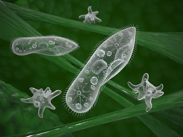 single-celled mikroorganismen in ihrem natürlichen lebensraum - einzeller mikroorganismus stock-fotos und bilder
