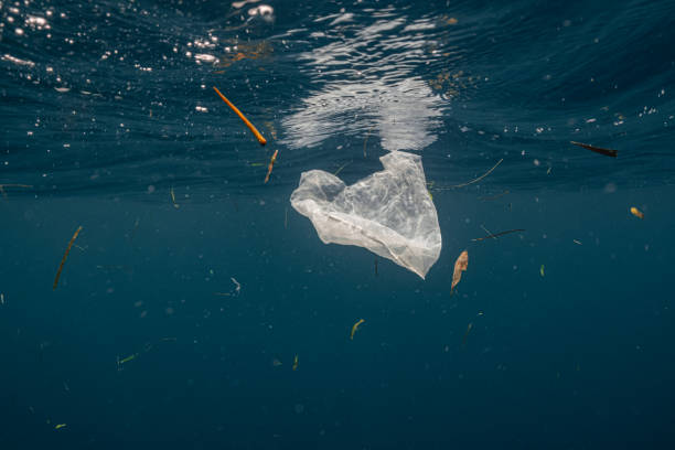 Single-use plastic floating in the surface. Single-use plastic is a major contributor of pollution in the ocean. It is often found in the stomach of whales, sea turtles and other marine species. polyp corals stock pictures, royalty-free photos & images