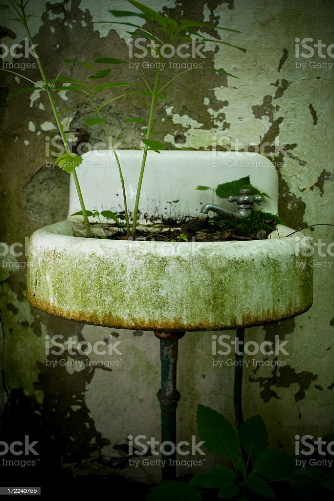sink weed royalty-free stock photo