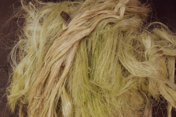 sisal plant fiber - sisal stock pictures, royalty-free photos & images