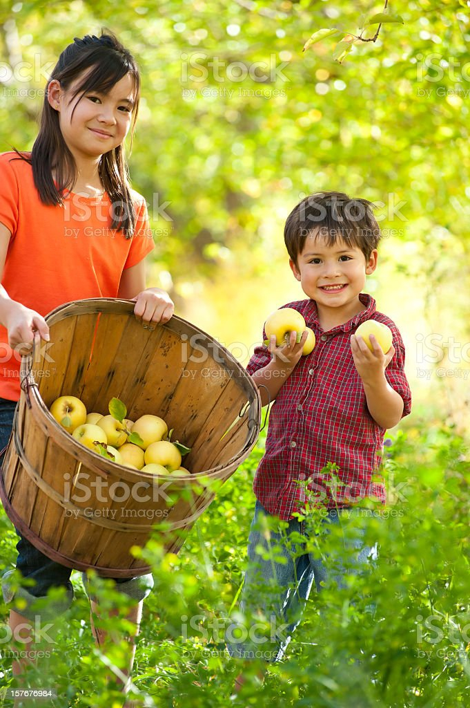 Sister and brother gathering apples stock photo