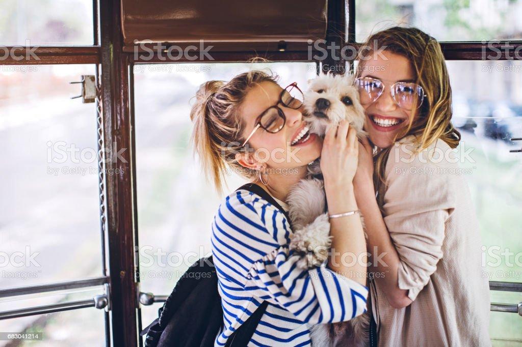 Sisters hugging their cute dog in tram foto de stock royalty-free
