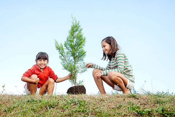 Sisters planting a tree stock photo
